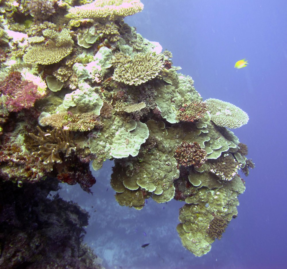 coral trunk.jpg