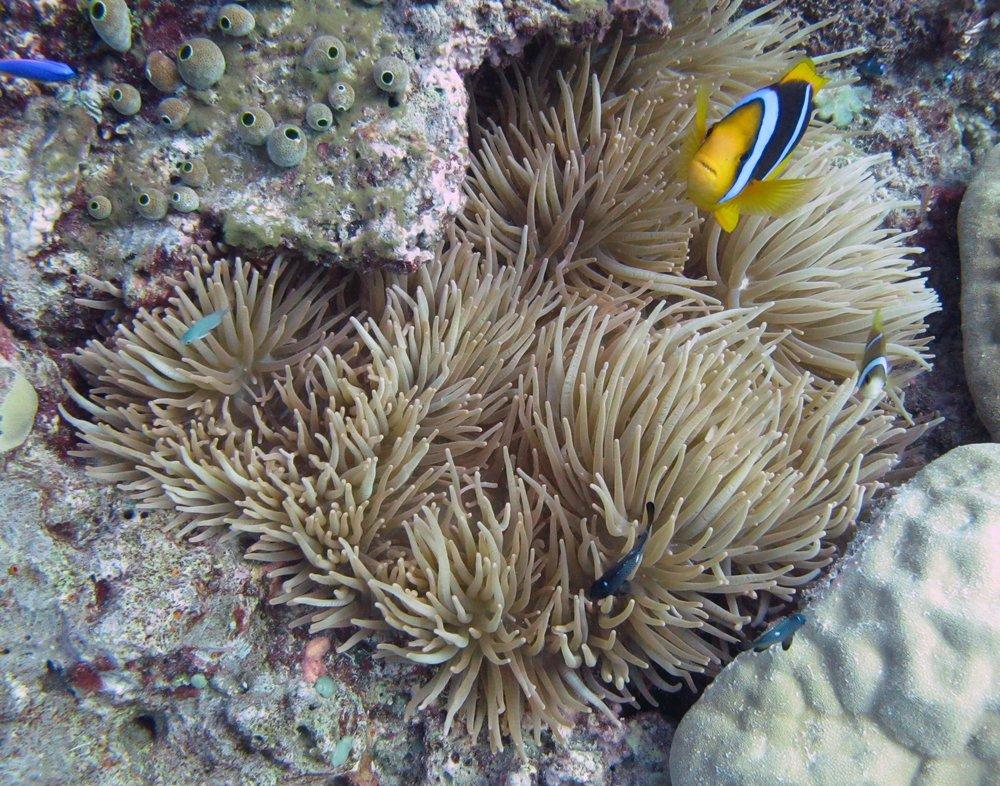 angry Nemo.jpg