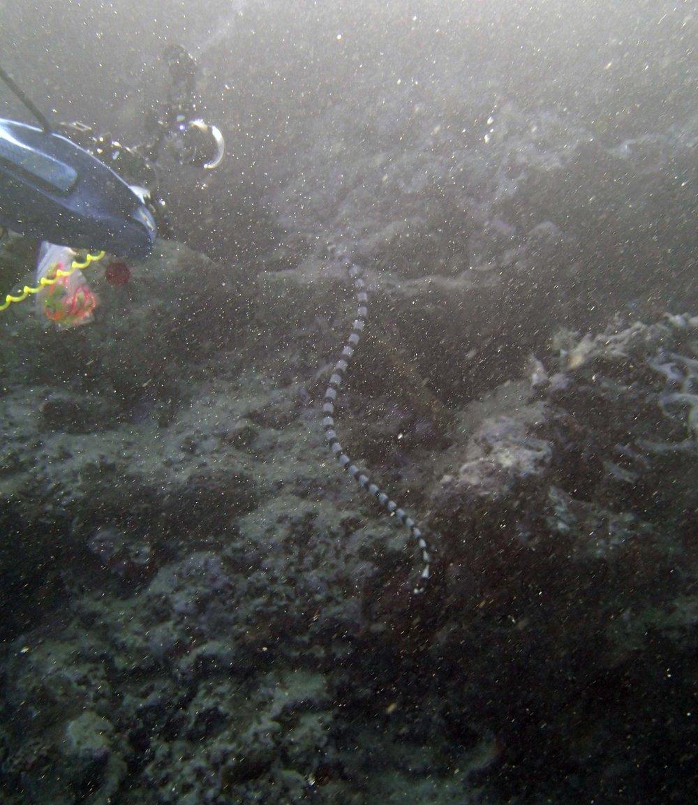 huge sea snake.JPG