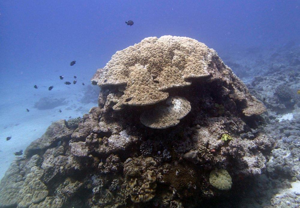 beautiful coral pillar.JPG