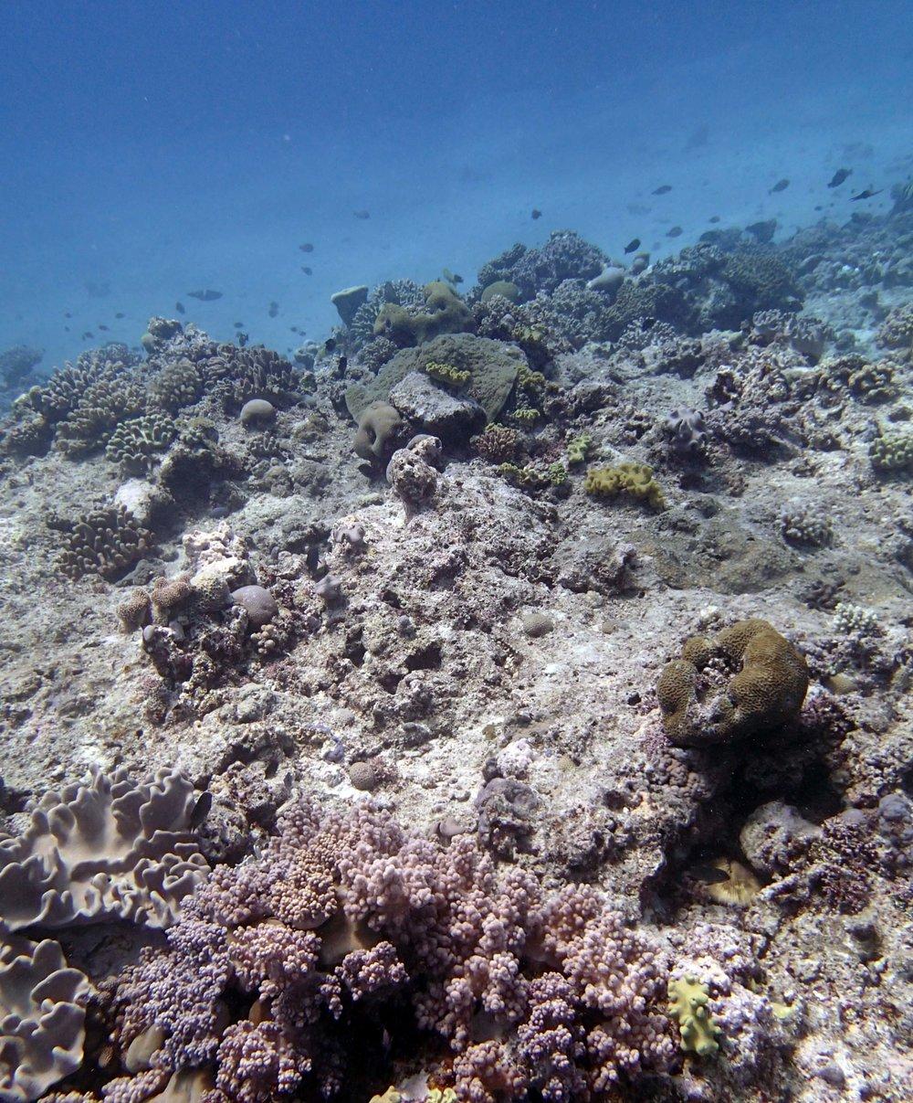beautiful Tongan reef.JPG