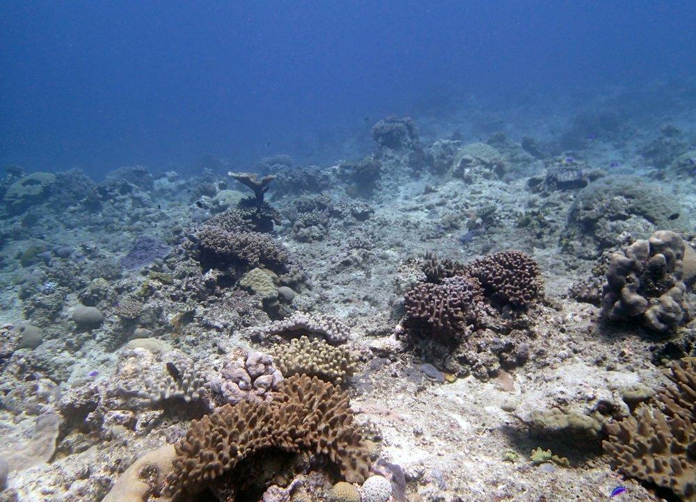 scoured reef.JPG