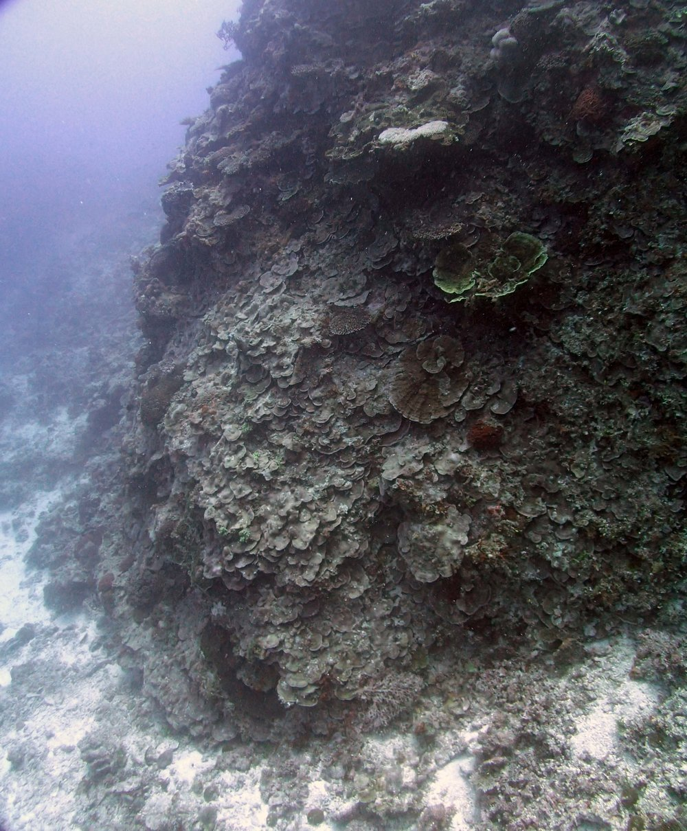 extensive coral growth.JPG