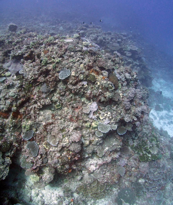 wide angle reef.JPG