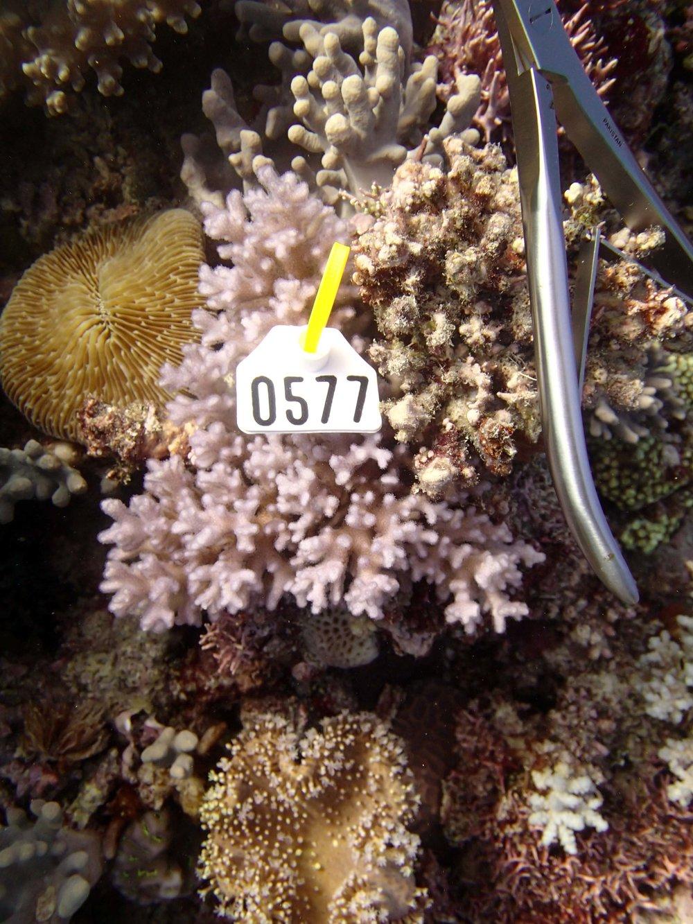 colony 24