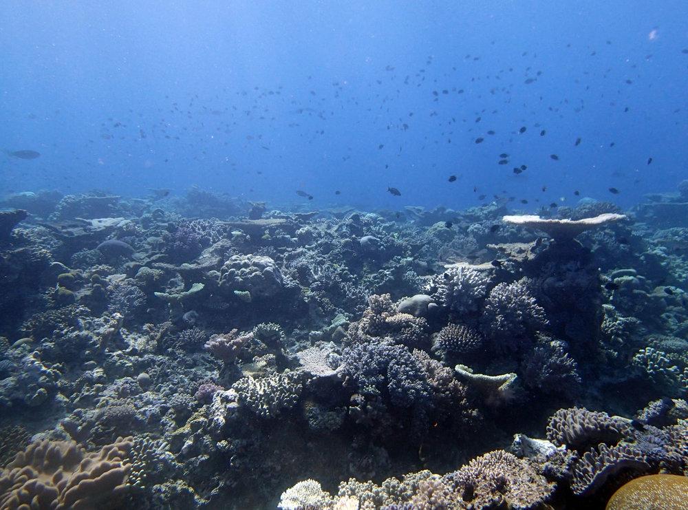 fish galore.JPG