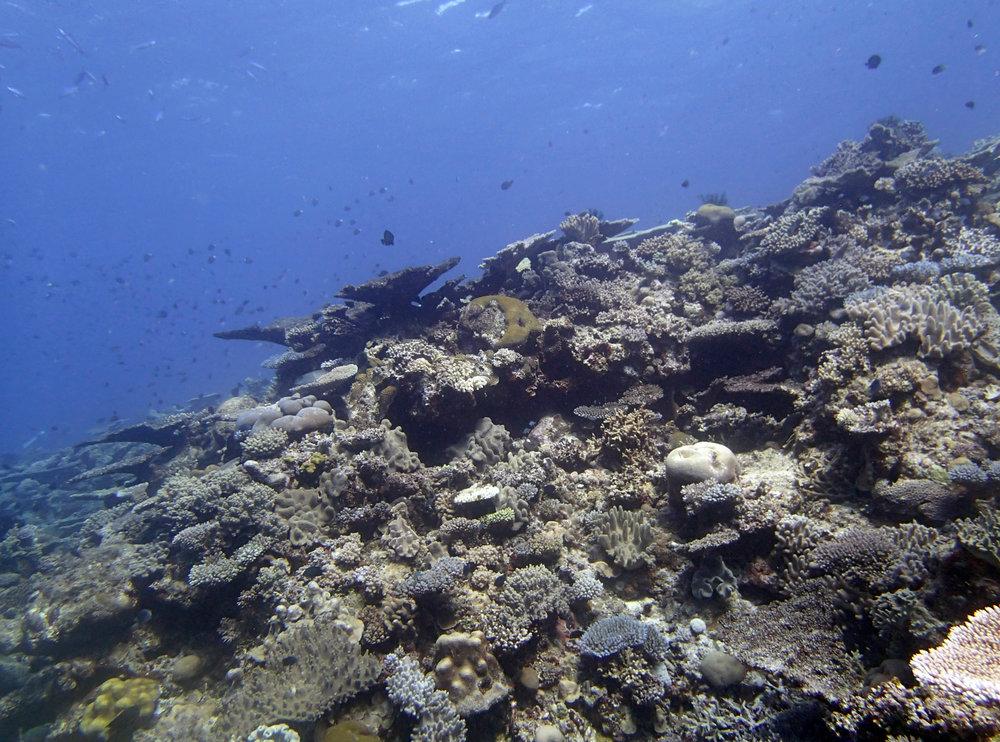 great dive.jpg