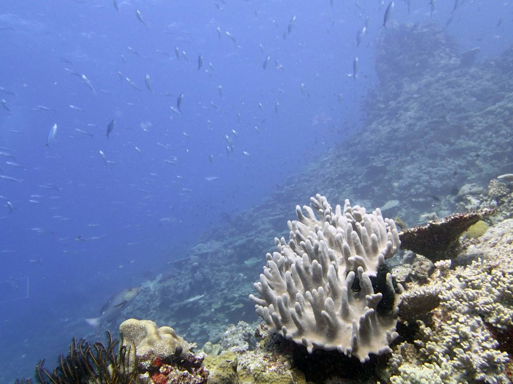 schooling fish.JPG