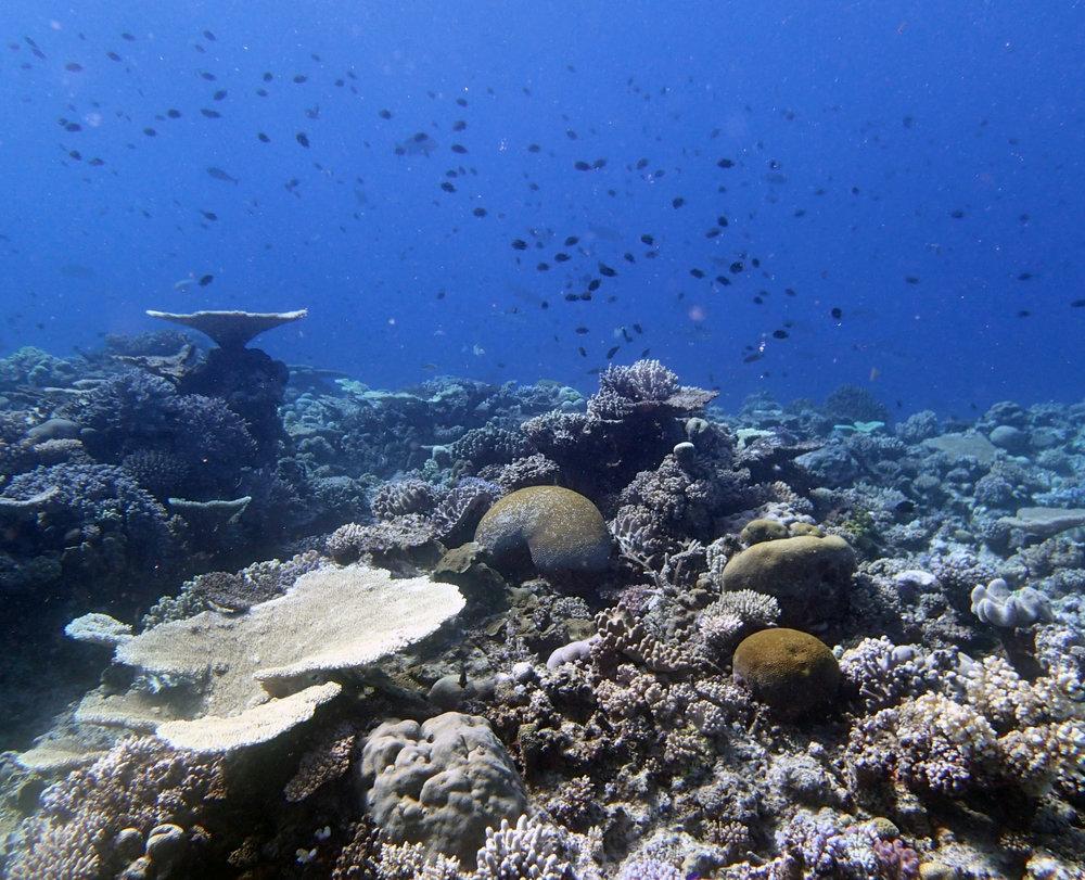the beauty of Tonga.JPG