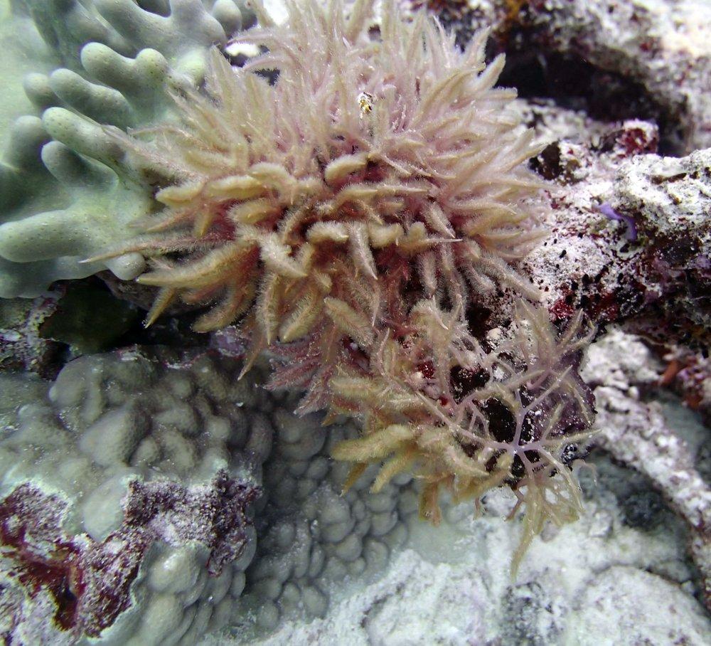mysterious red algae.jpg