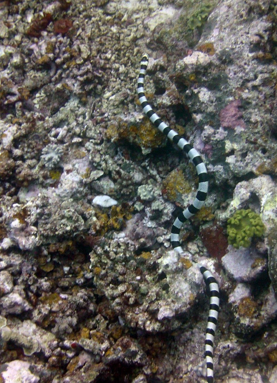 sea snake.jpg