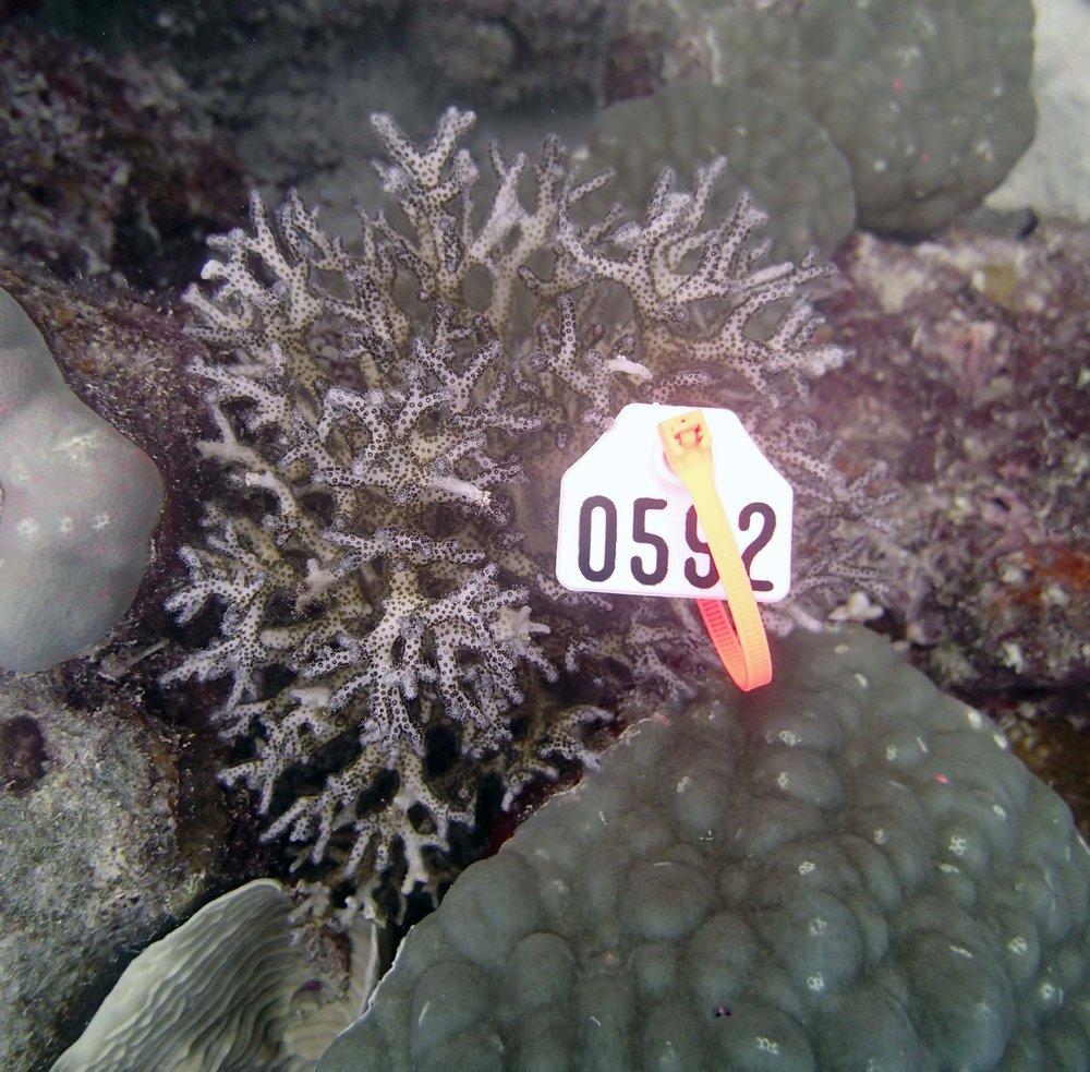 colony 69