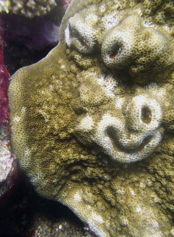 smiling coral.jpg