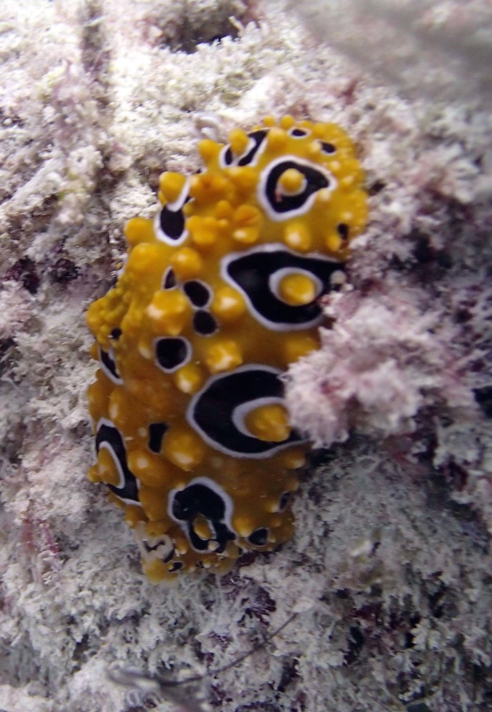 nudibranch (1).jpg