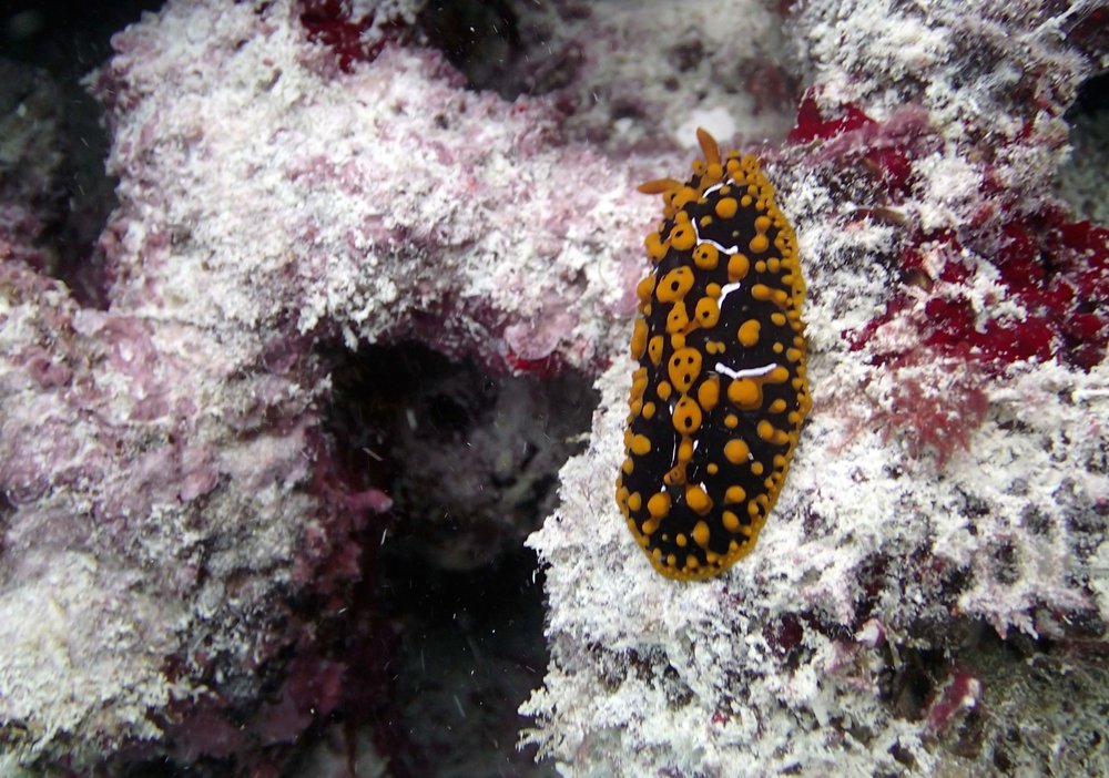 nudibranch 3.jpg
