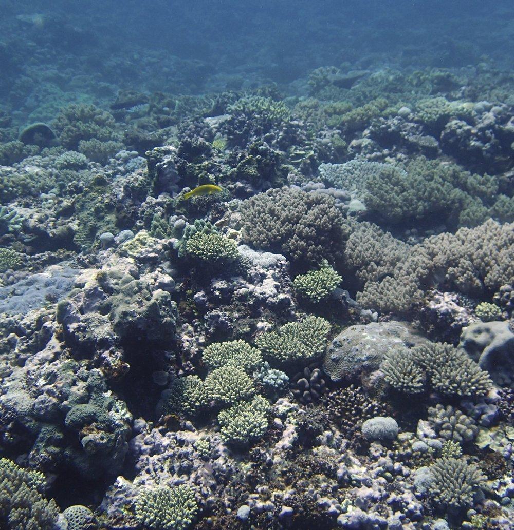 underwater shooting mode (1).jpg