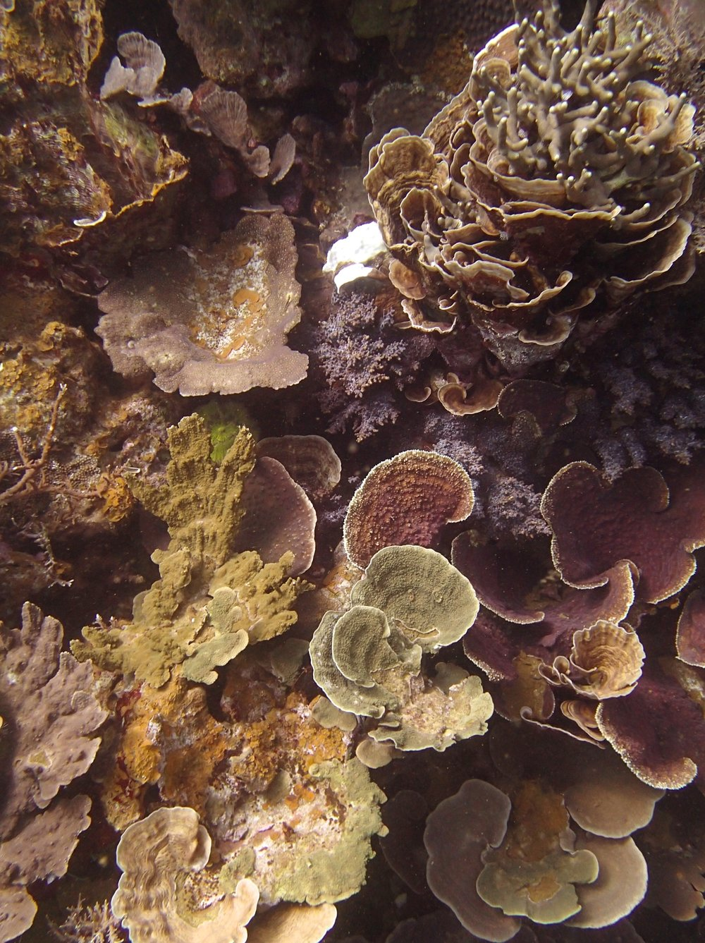 NCPB22 weird coral assemblage.jpg