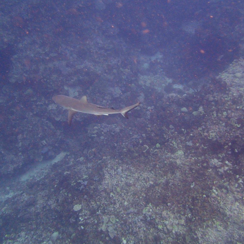 shark at NCCR27 (1).jpg
