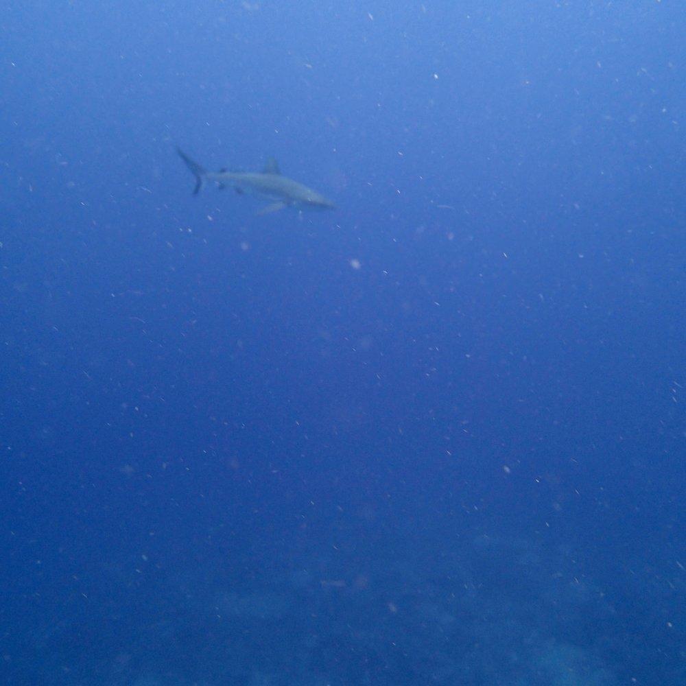 grey reef.jpg