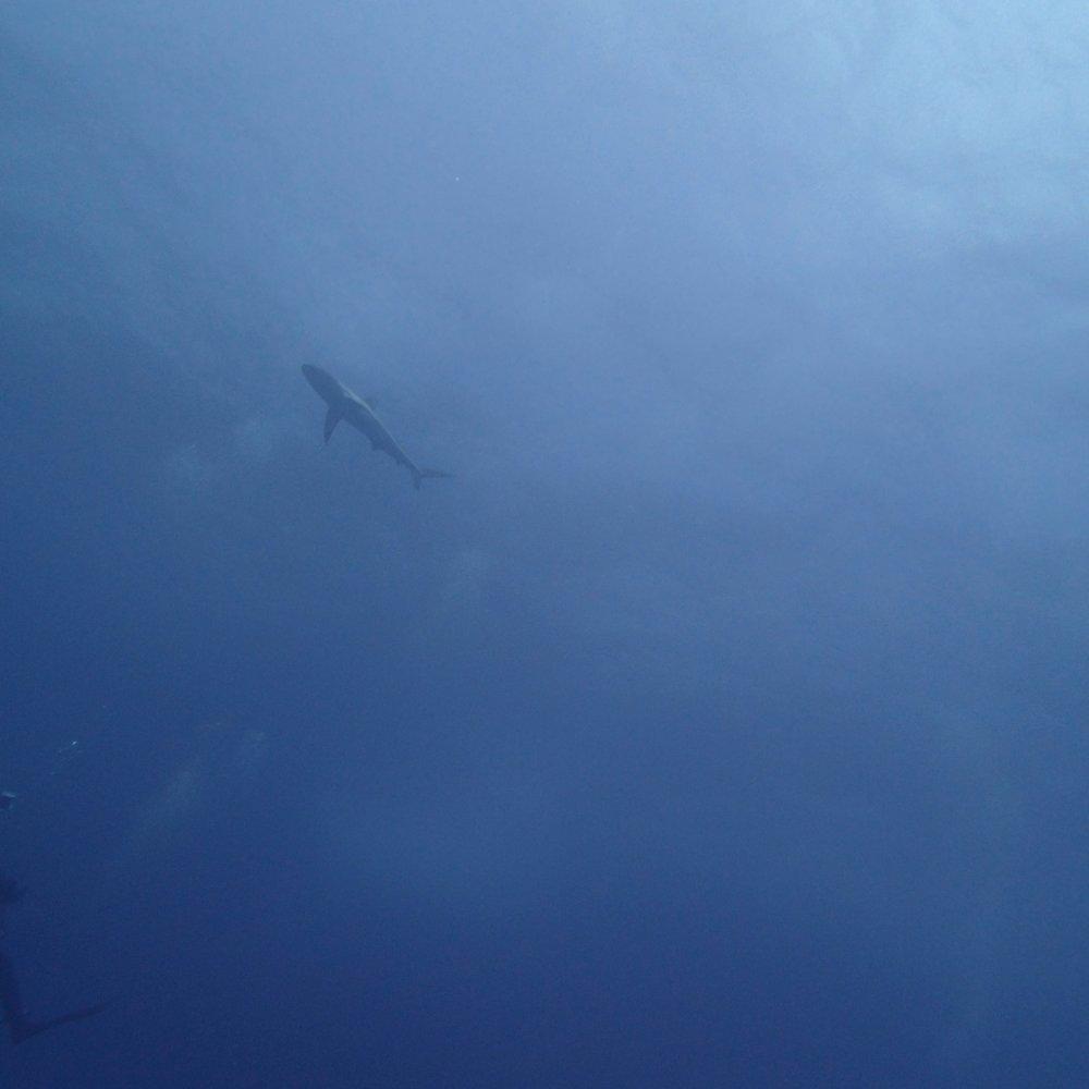 shark at NCCR27.jpg