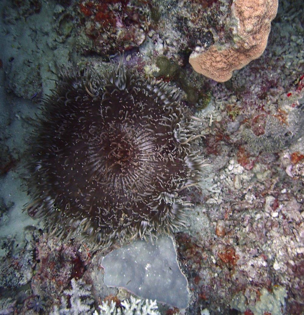 weird anemone.jpg