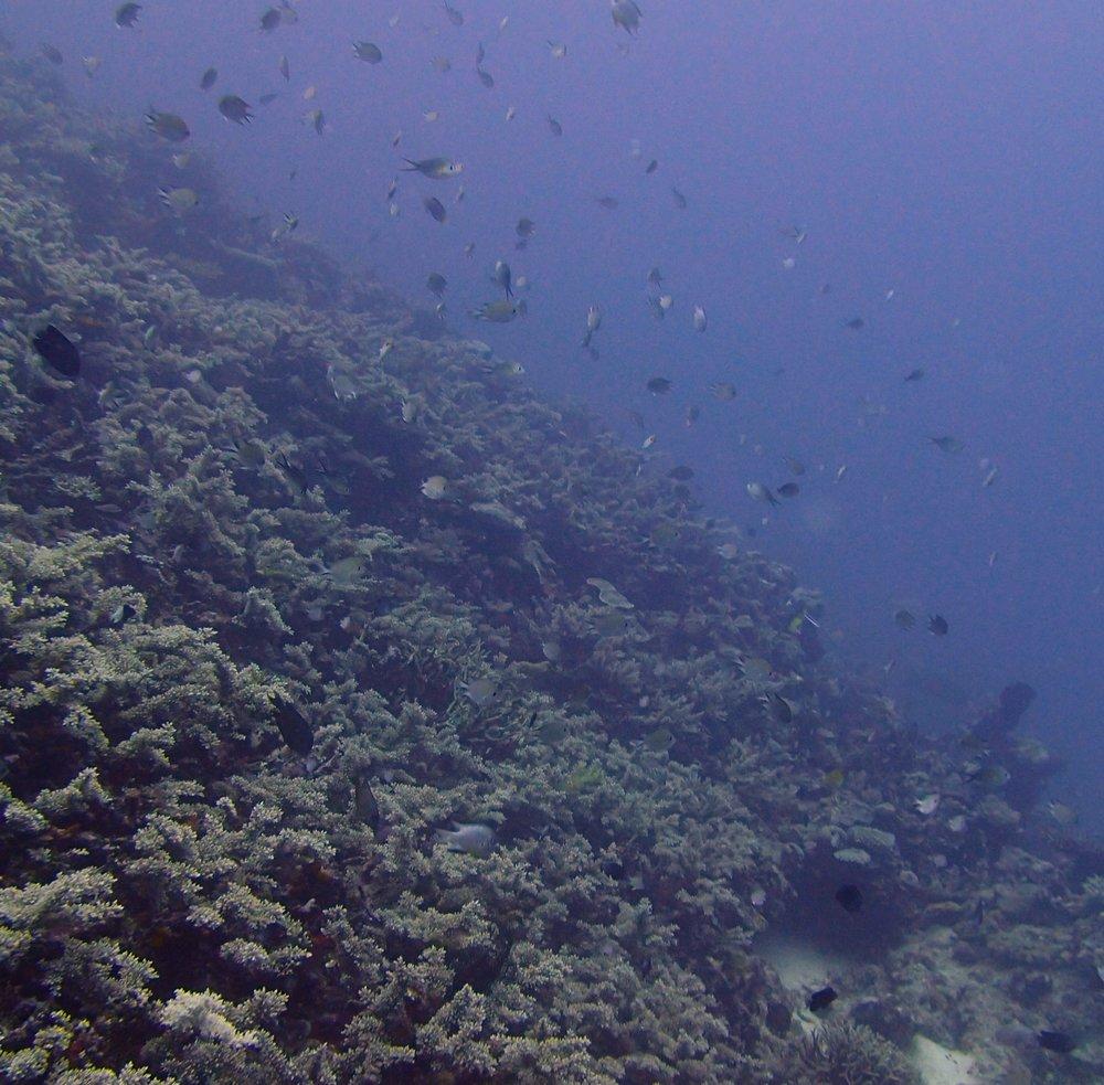 view from 30 meters.jpg