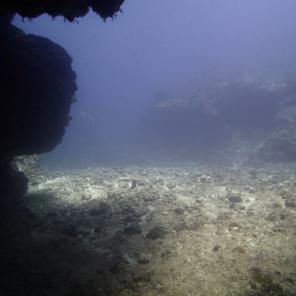 sharks at cave mouth.jpg