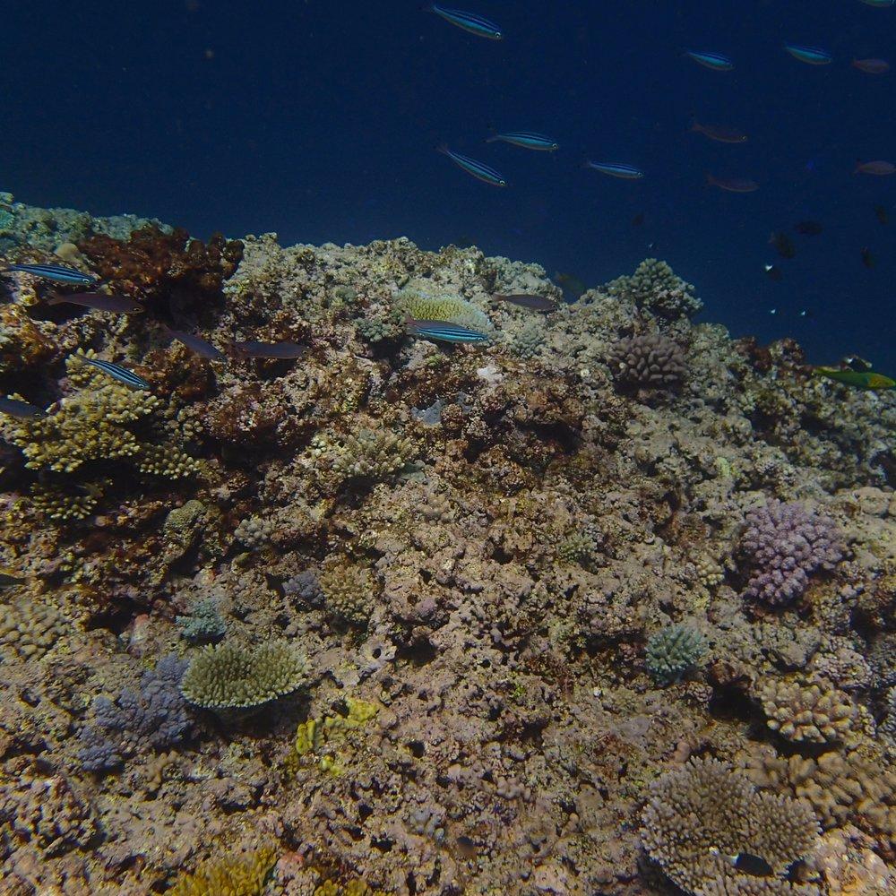 NCCR33 shallows.jpg