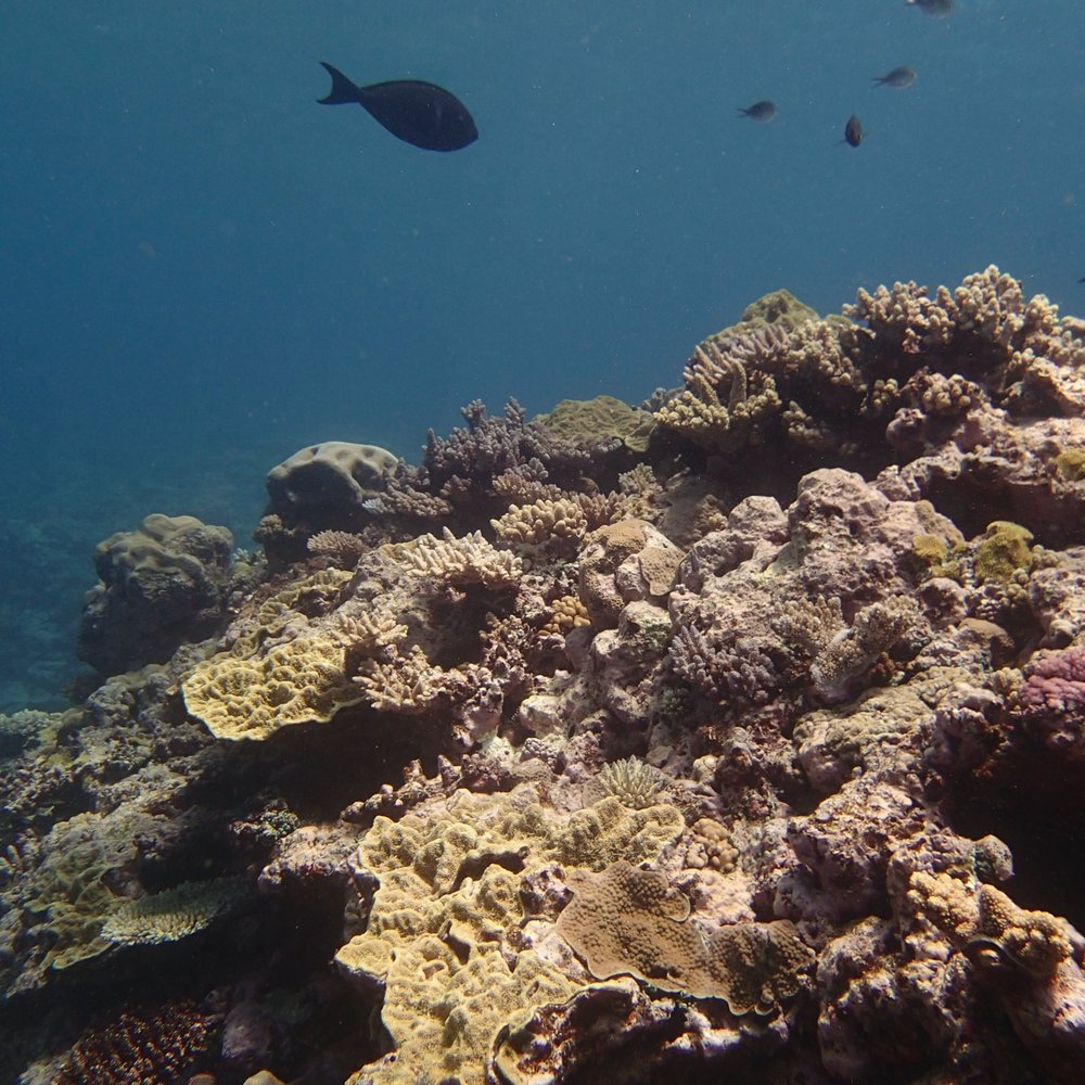 NCCR34 shallows.jpg