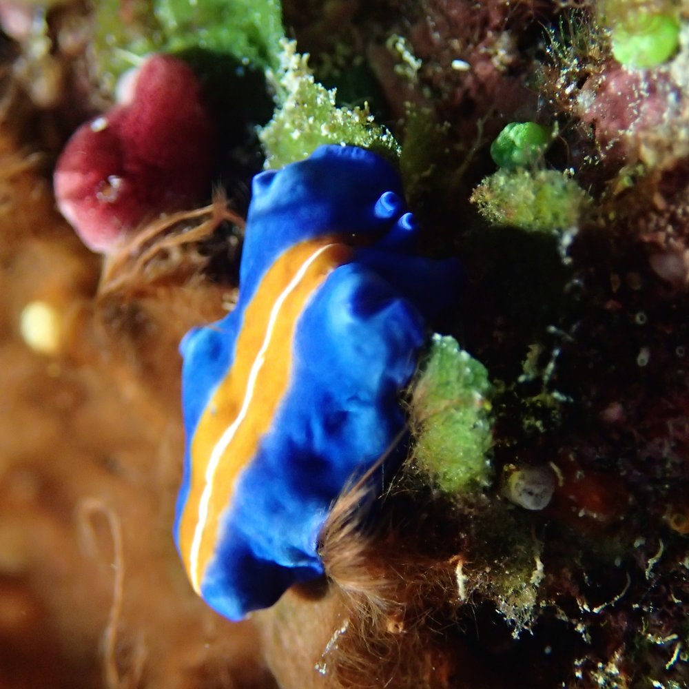 nudibranch 2.jpg