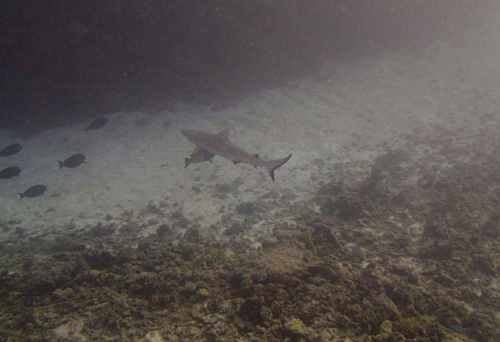 shark at NCCR35 (1).jpg