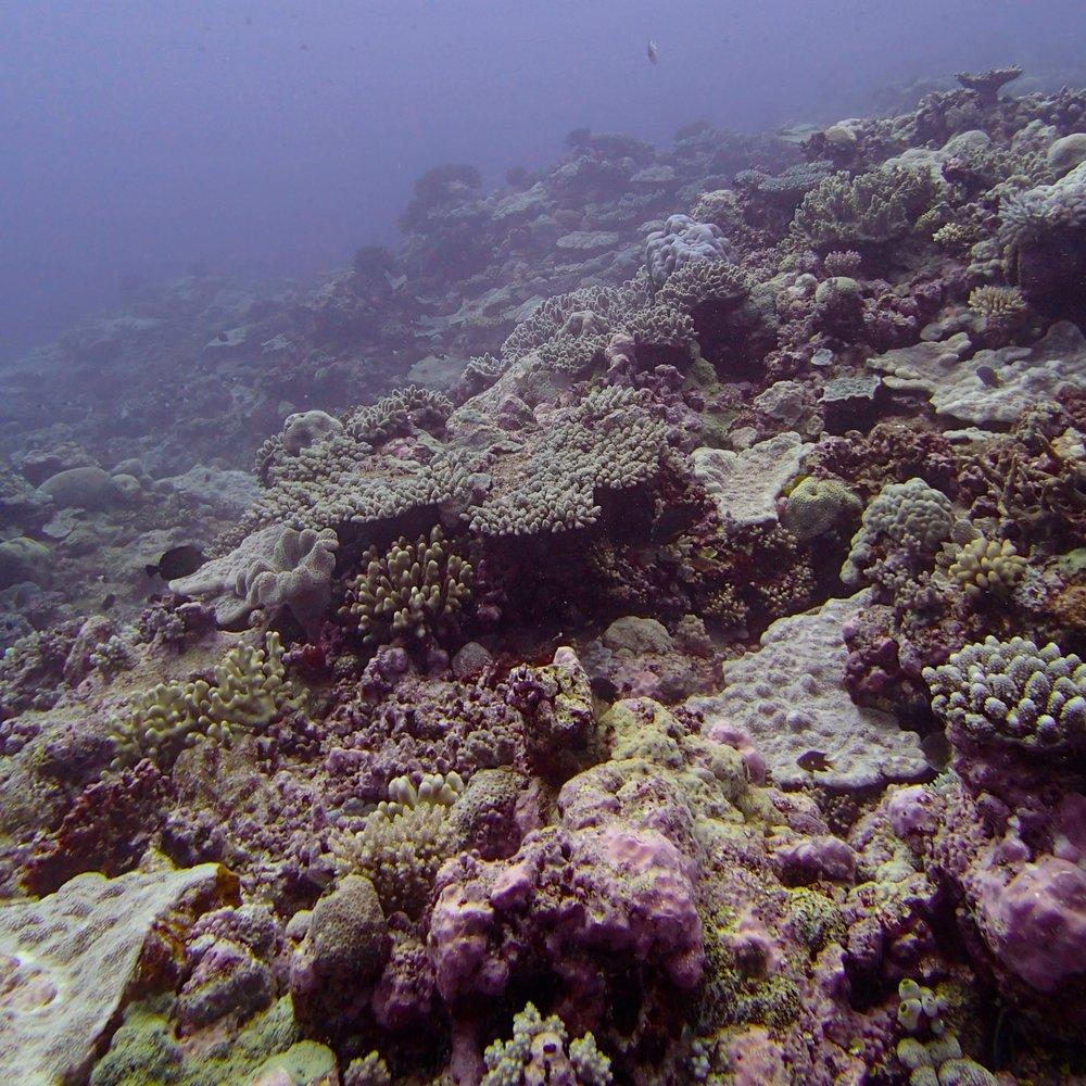 deep reef super strong current.jpg