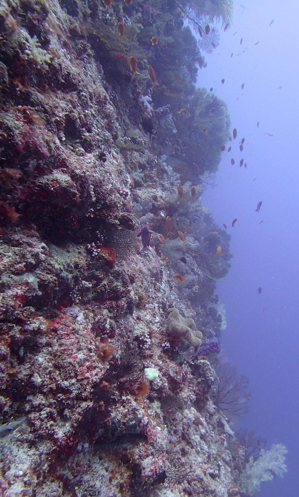great wall dive.jpg
