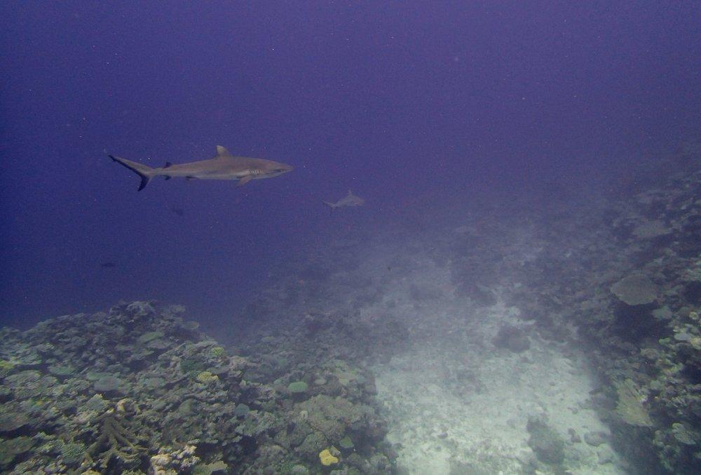 more sharks.jpg
