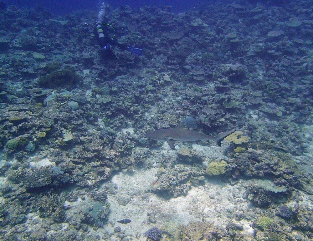 shark at NCPO40 (1).jpg