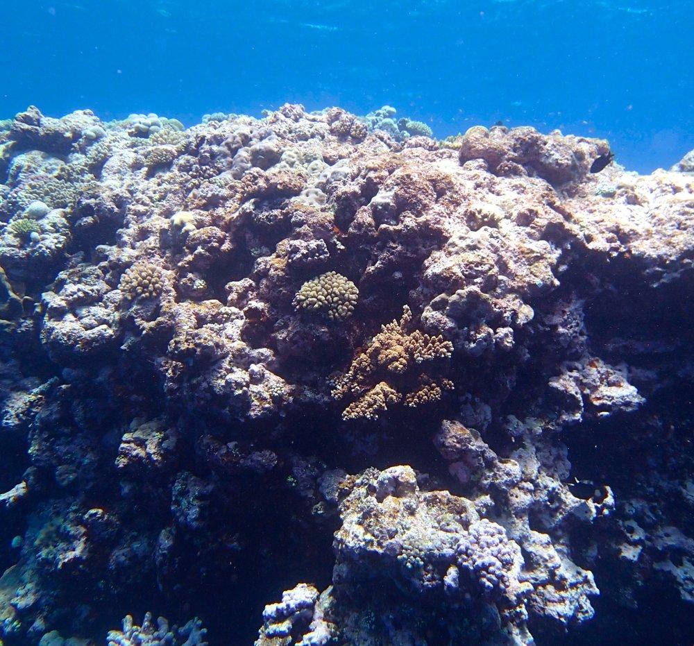 NCHU44 shallows.jpg