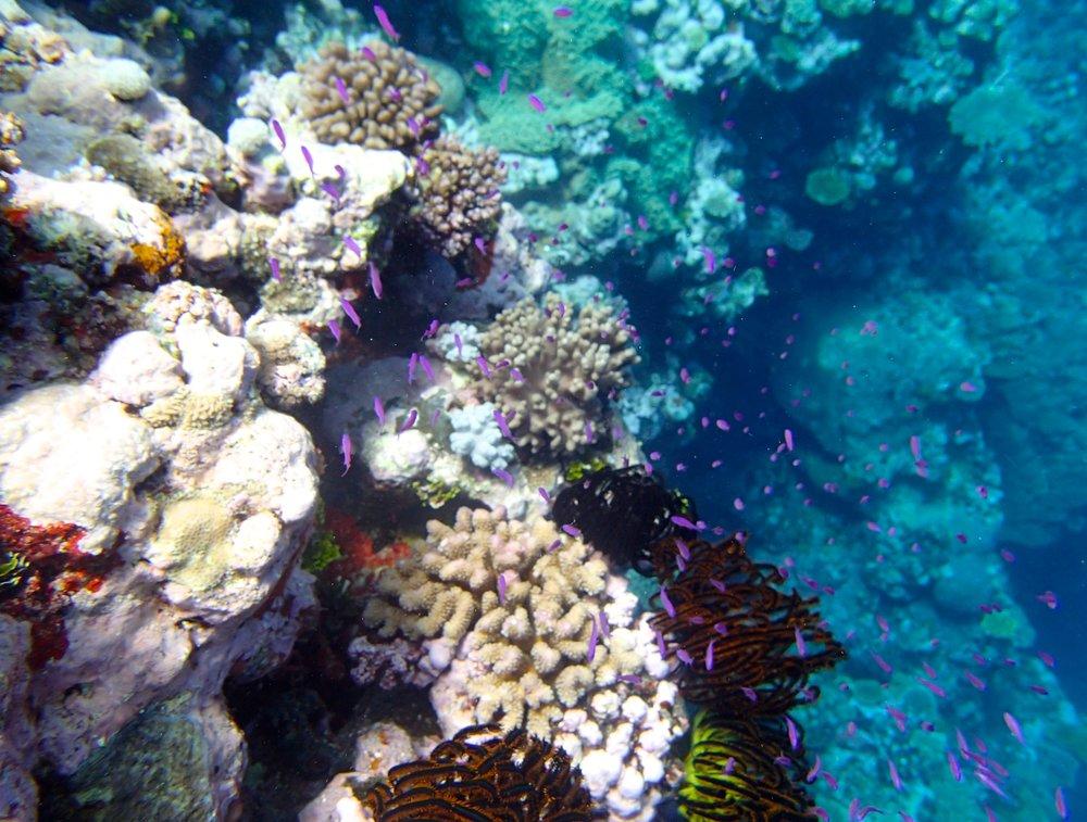 purple fish.jpg