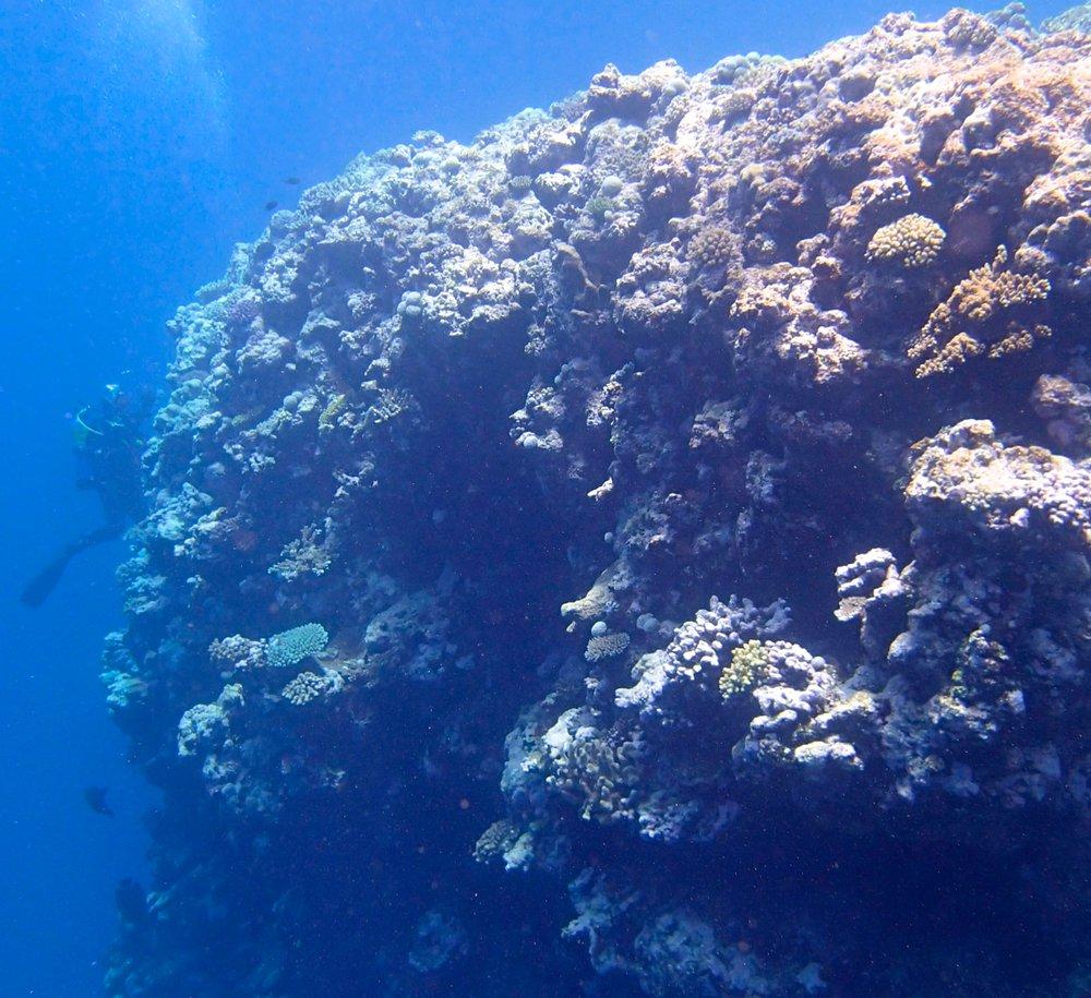 shallows (1).jpg