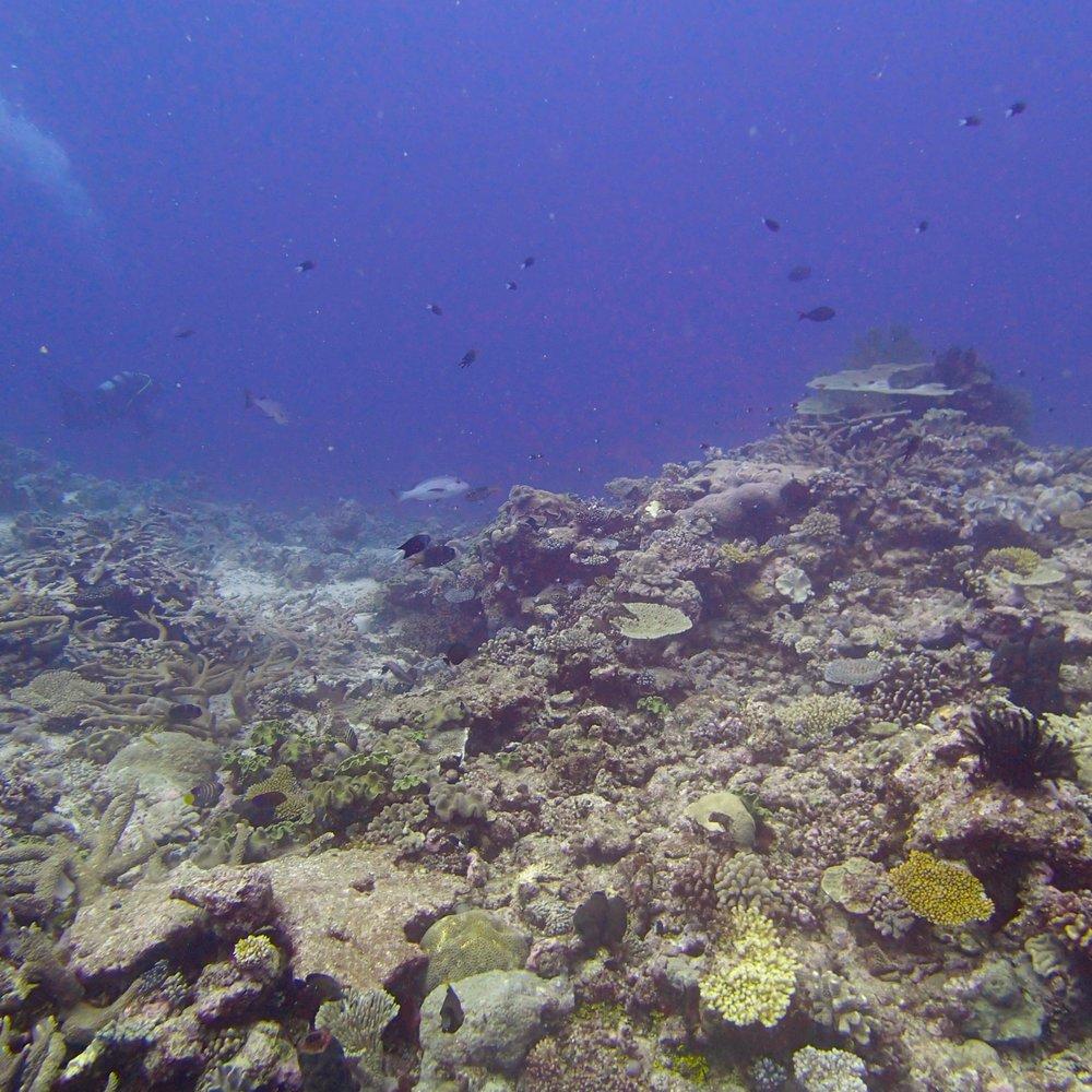 drift dive.jpg