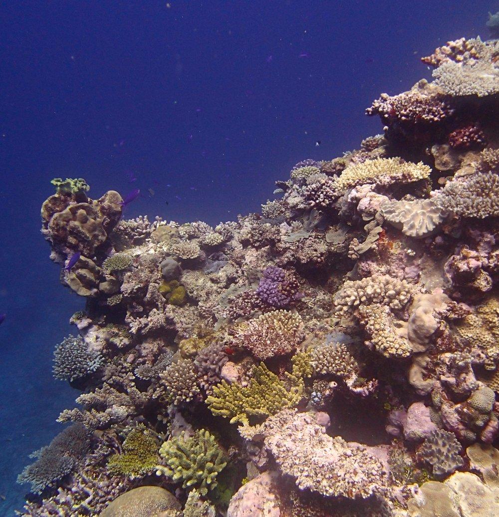 shallow coral garden.jpg