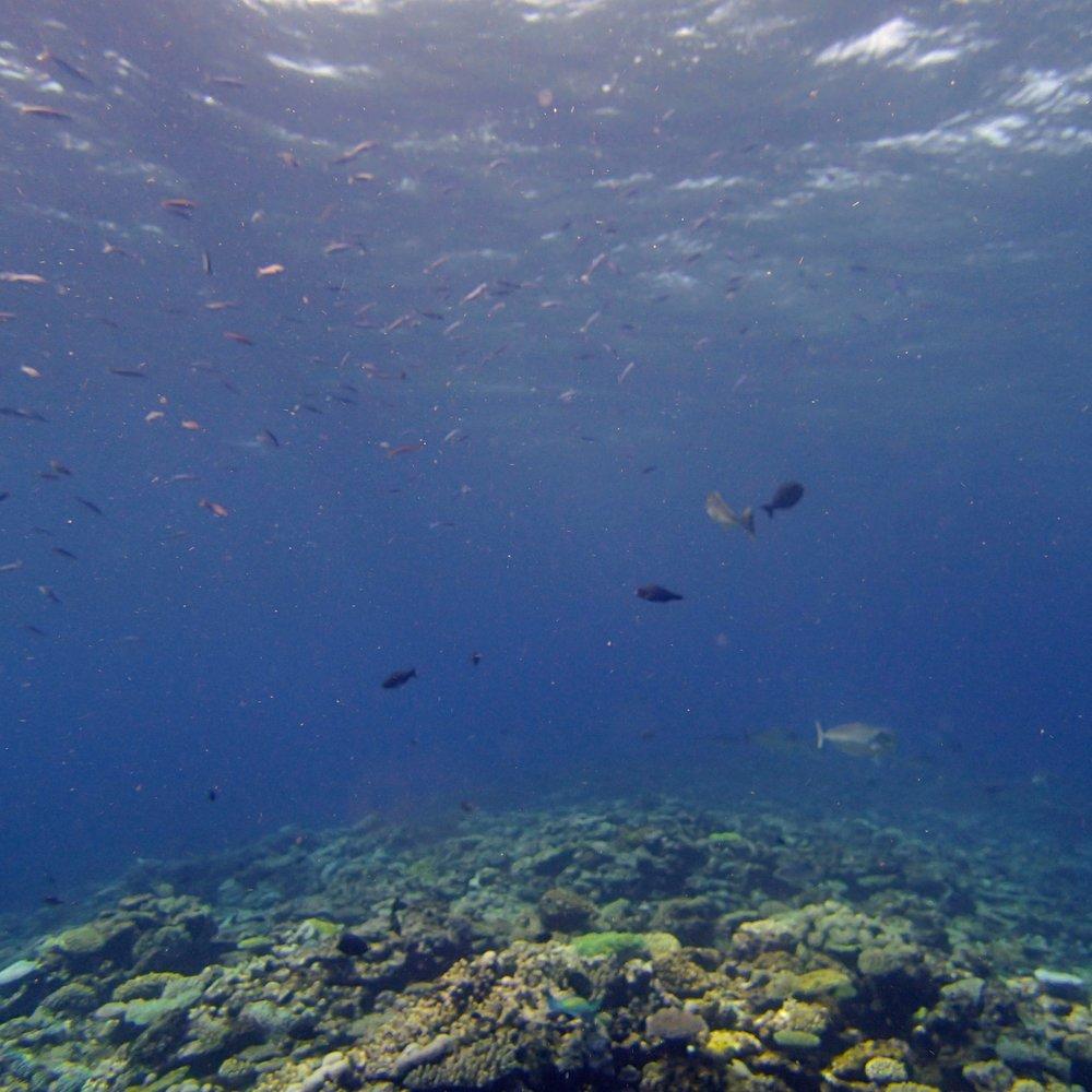 top of the reef.jpg