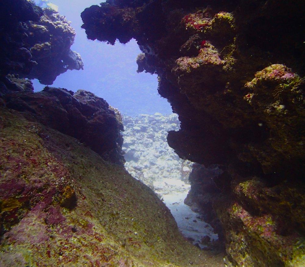 in the swim-through.jpg