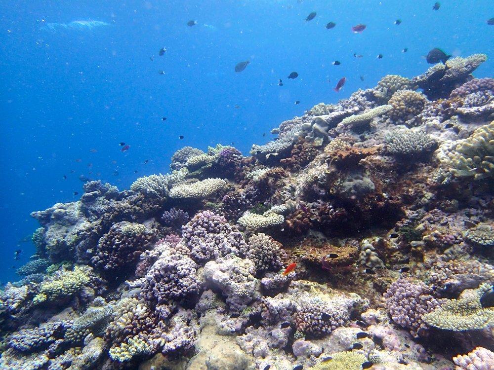 NCGU55 shallows.jpg