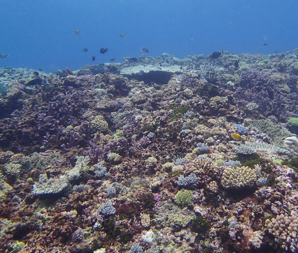 live coral area.jpg