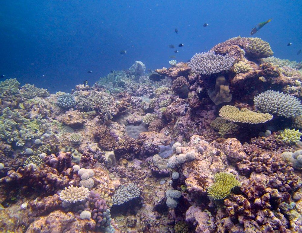 last dive at Huon.jpg