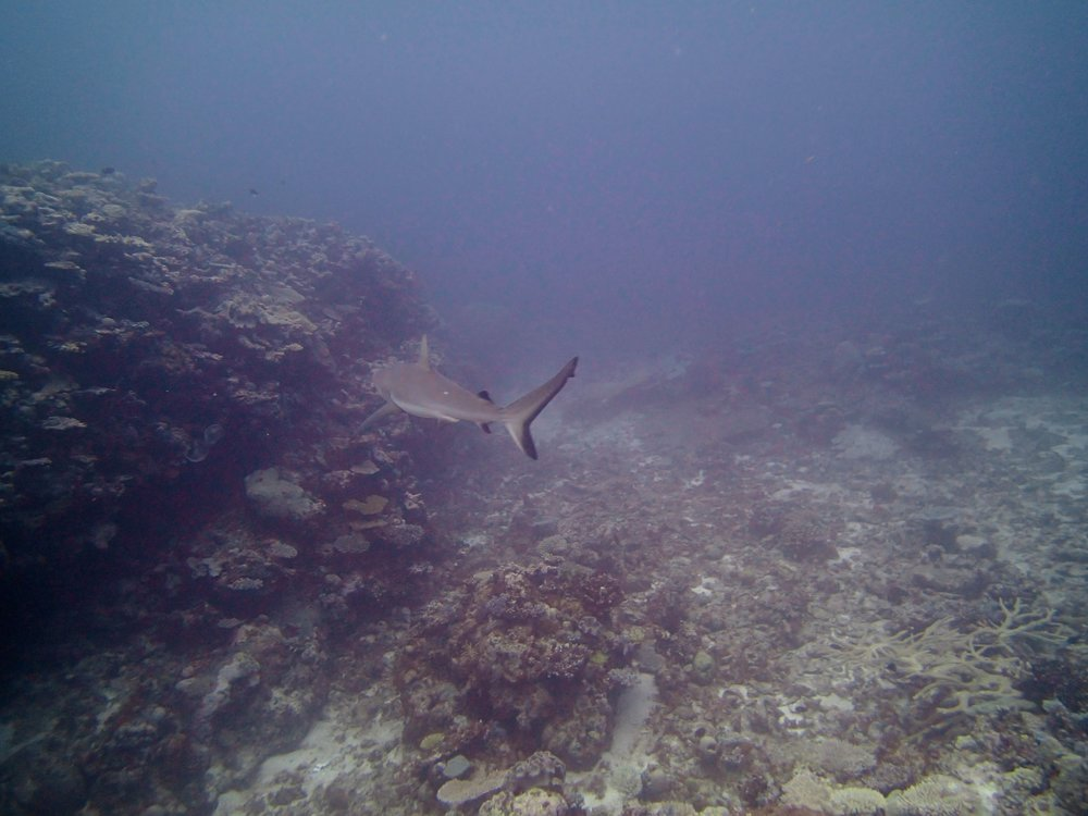 retreating shark.jpg