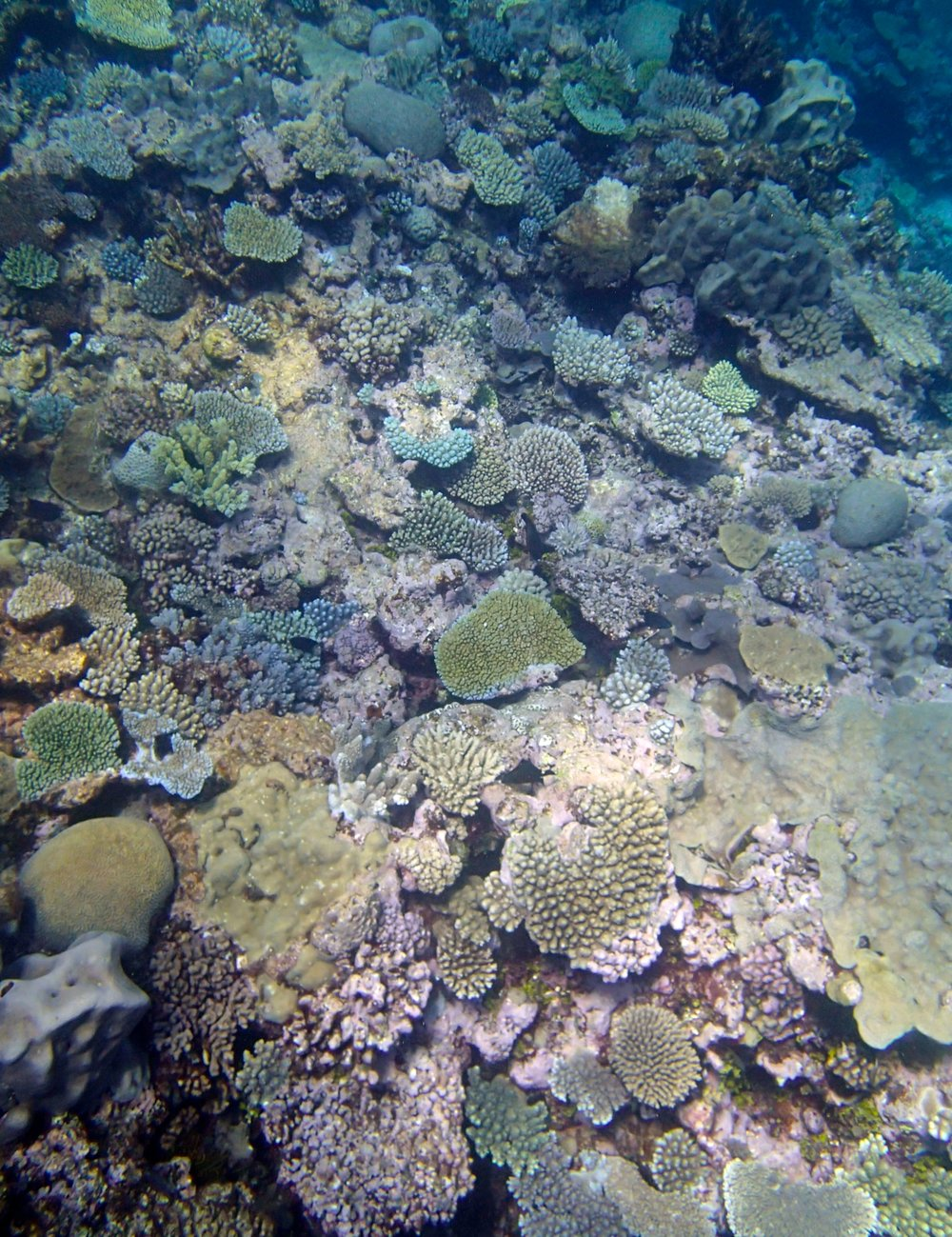 11-19-13 Surprise Atoll.jpg