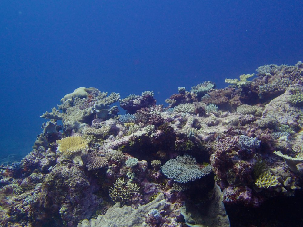 1st dive at Surprise Atoll.jpg