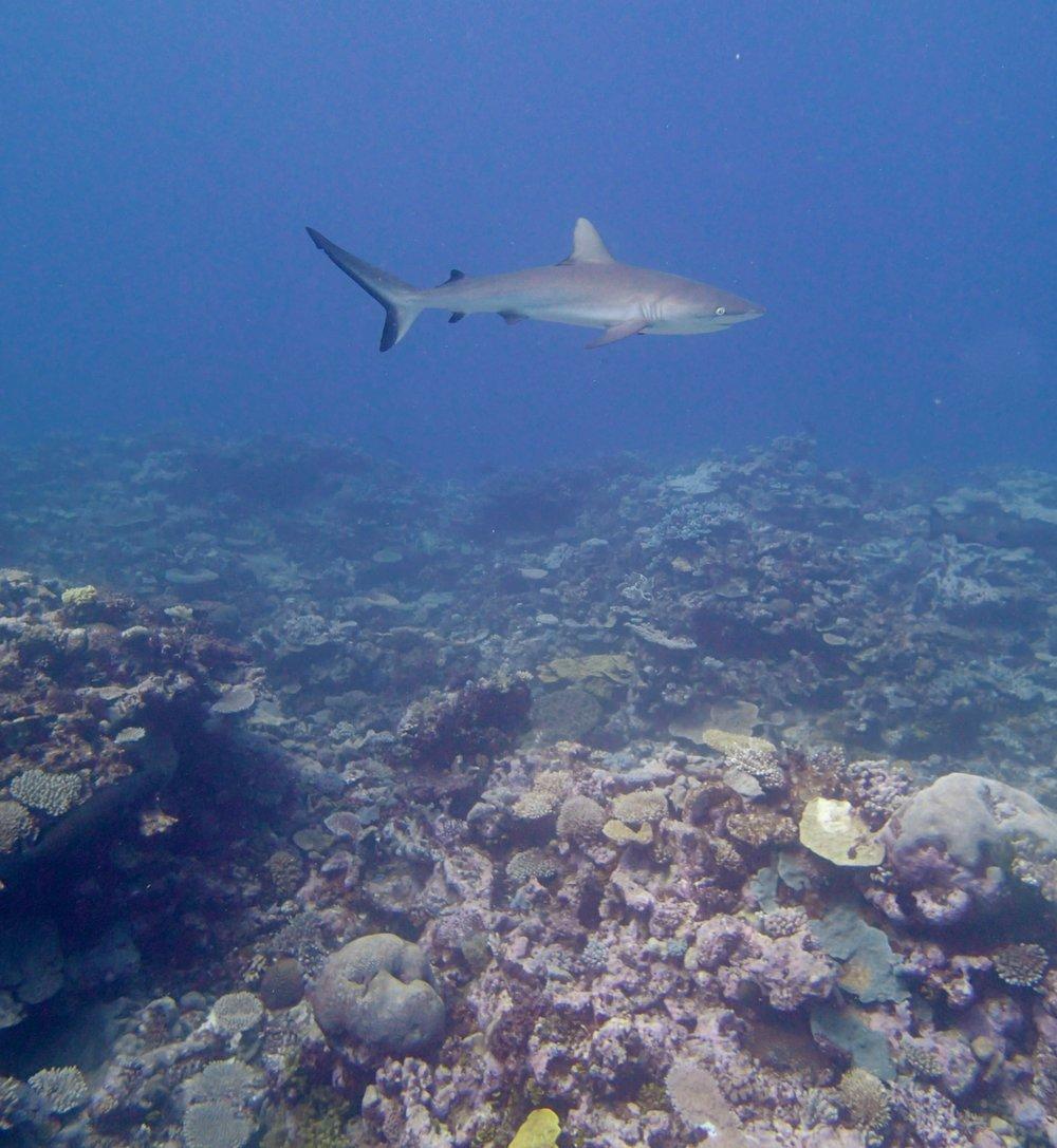 shark at 20 m.jpg