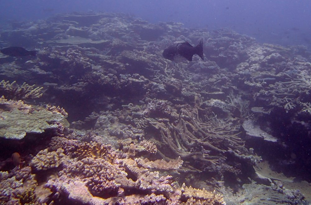 cool grouper.jpg